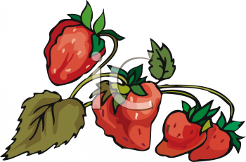 Strawberries clipart bunch. Picture of a ripe