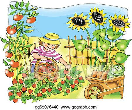 Strawberries clipart garden. Vector stock boy picking