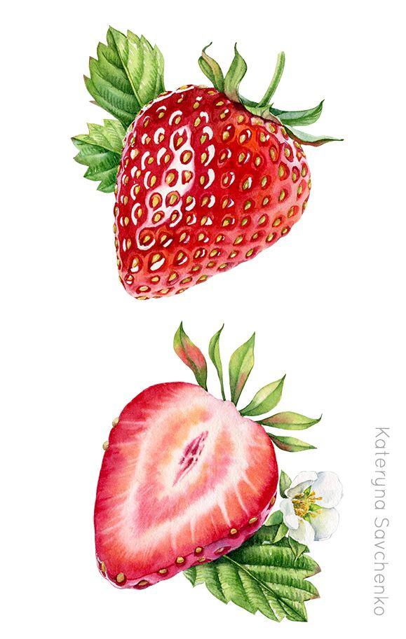 Watercolor botanical illustration of. Strawberries clipart half