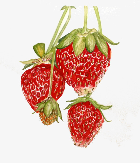 Strawberries clipart juicy. Painted hongyan full fruit
