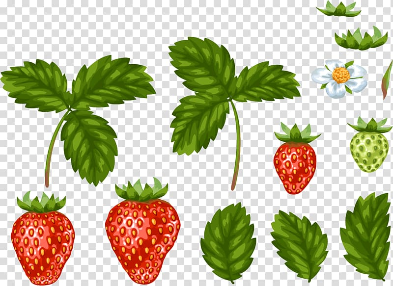 Strawberry food hand painted. Strawberries clipart leaf