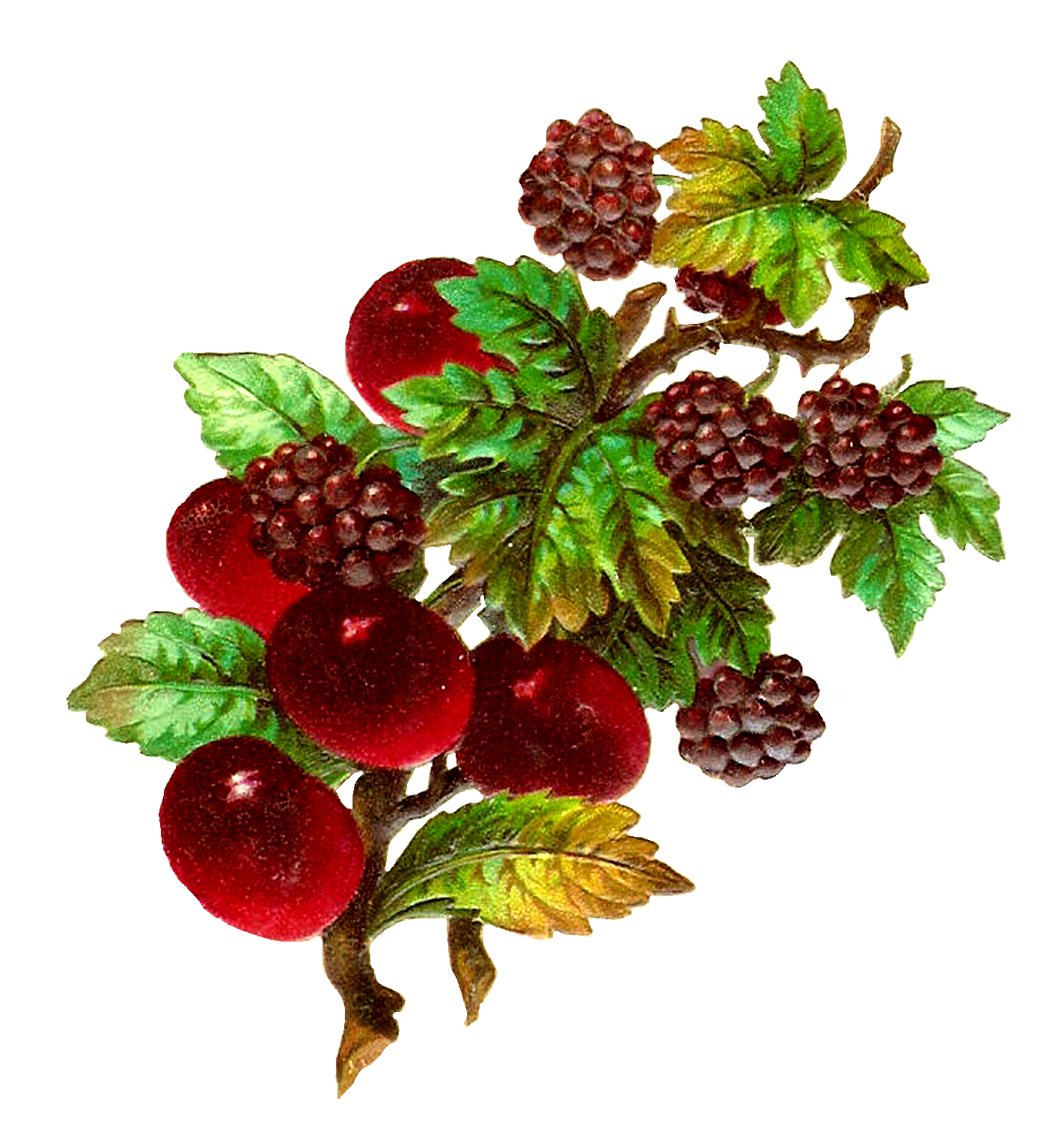 Fru png d coupage. Strawberries clipart line art