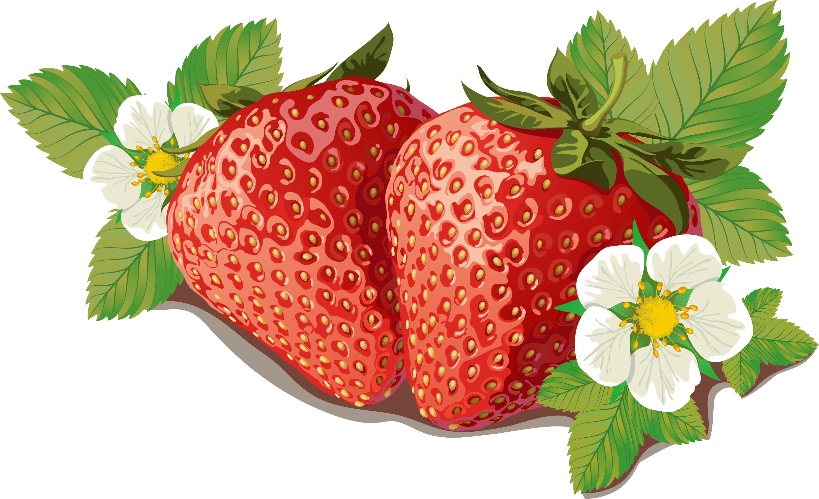 Strawberry marmalade label template. Strawberries clipart orange