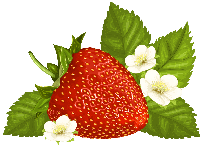 Strawberry png image clip. Strawberries clipart outline