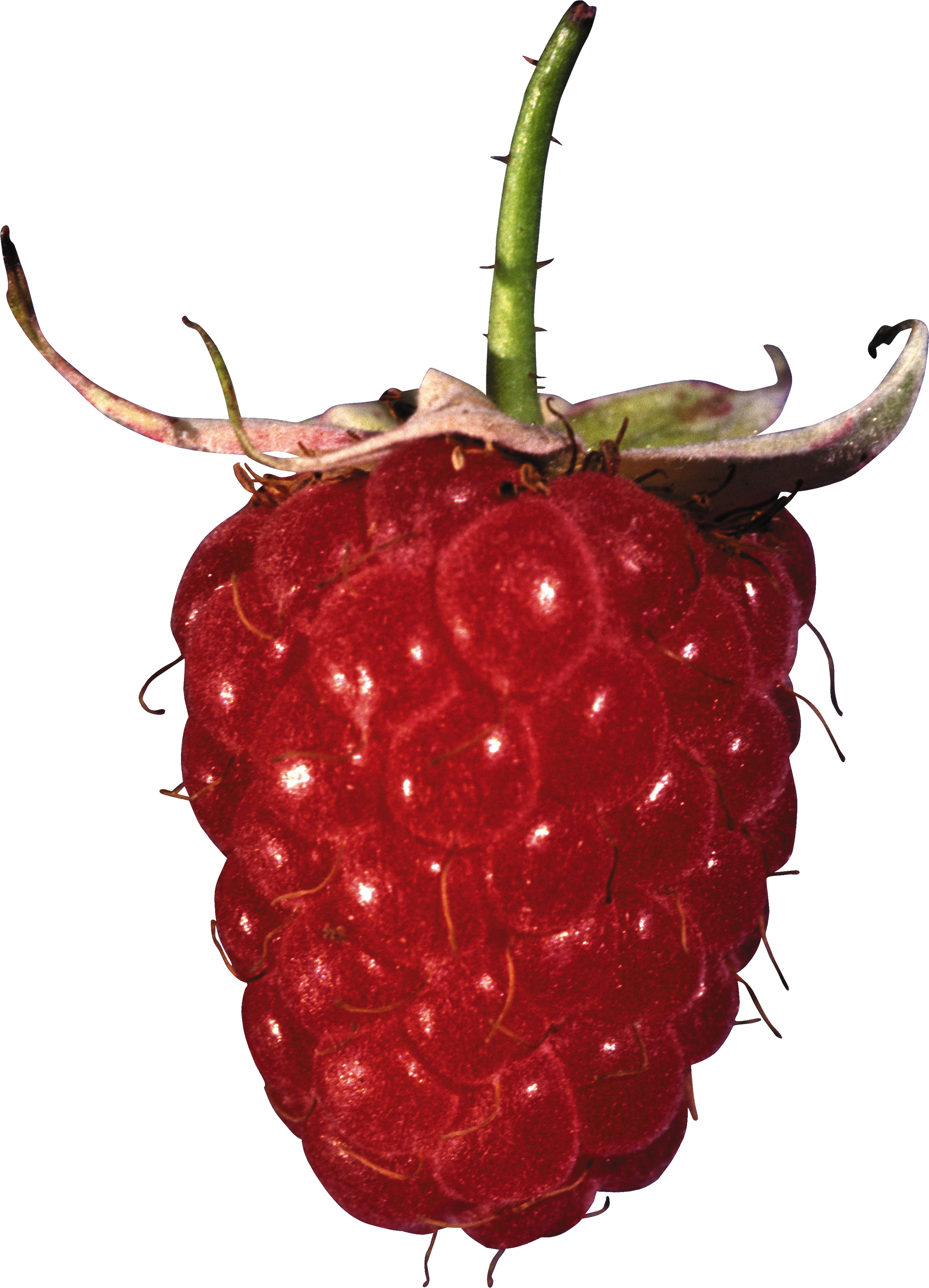 Strawberries clipart raspberry. Png images free pictures