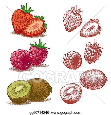 Vector illustration strawberry kiwi. Strawberries clipart raspberry