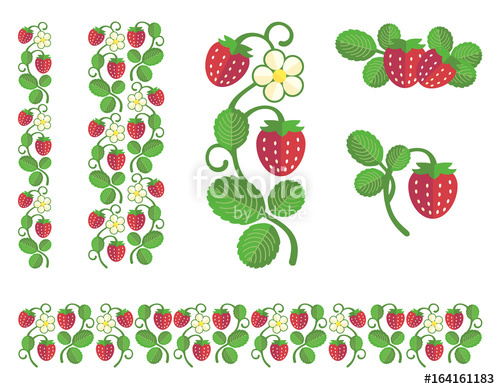 Strawberry colored with berries. Strawberries clipart stem