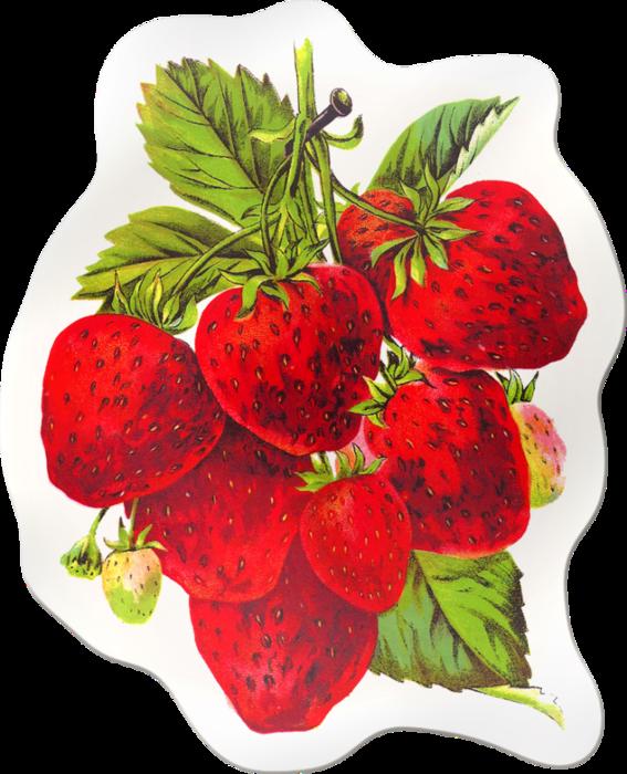 Sticker x kb meyveler. Strawberries clipart strawberry field