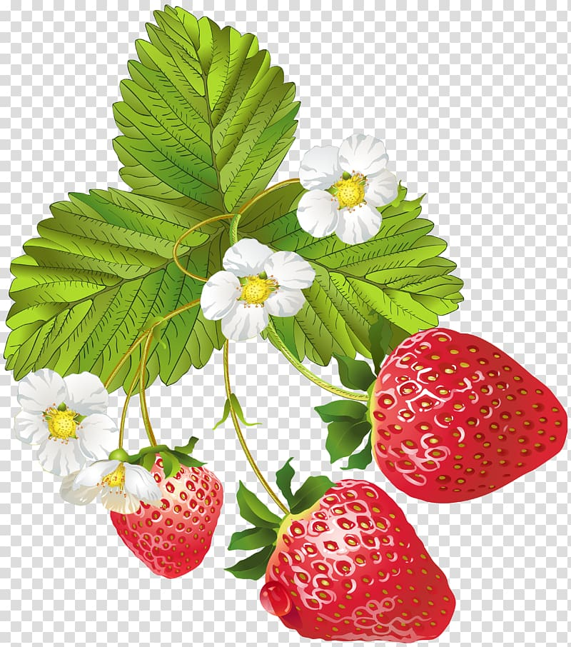 Strawberries clipart strawberry flower. Three with flowers frutti
