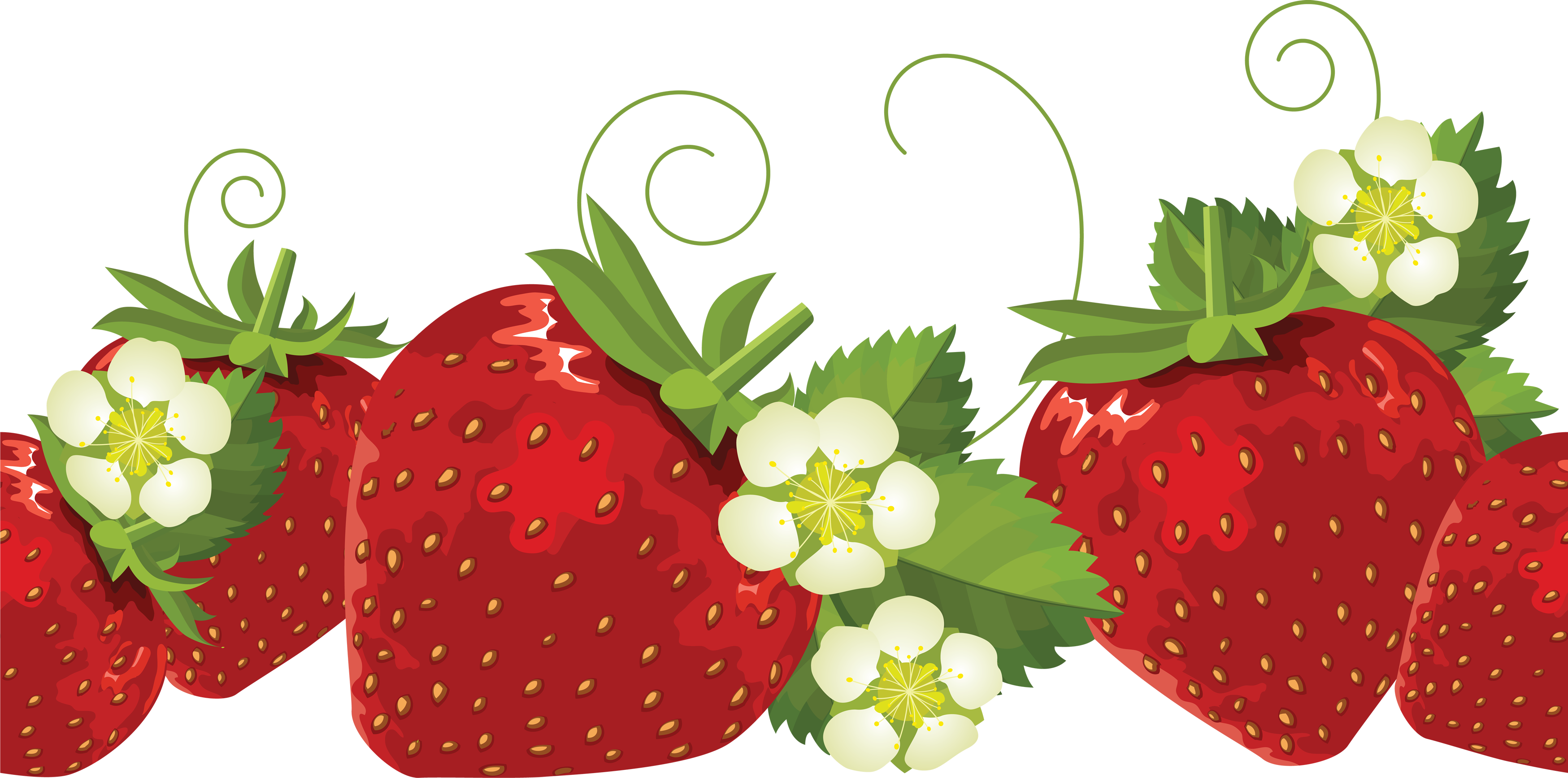 Strawberries clipart strawberry flower. Pin by kushalagarwal on