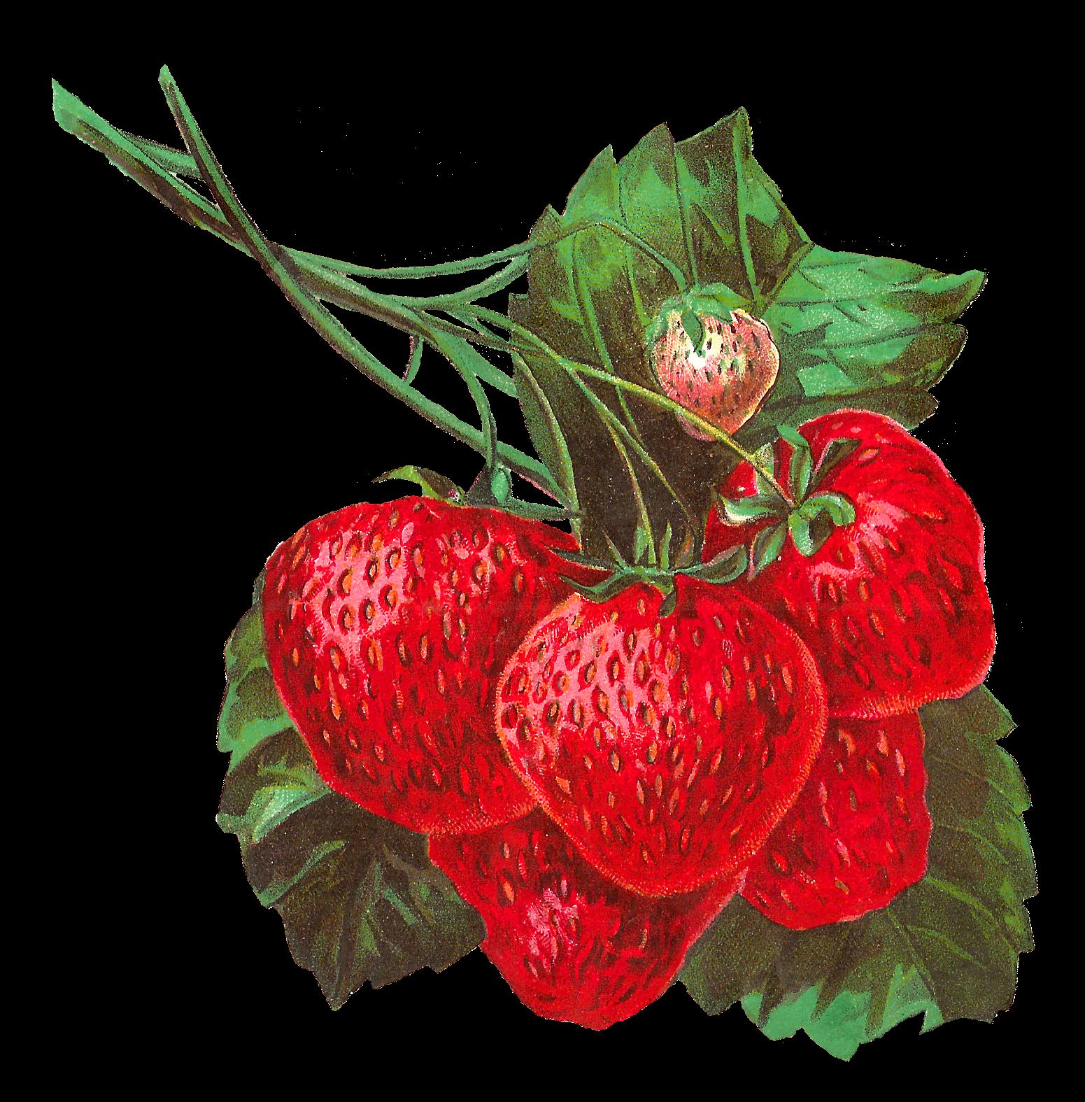 Strawberries clipart strawberry leave. Pretty digital clip art