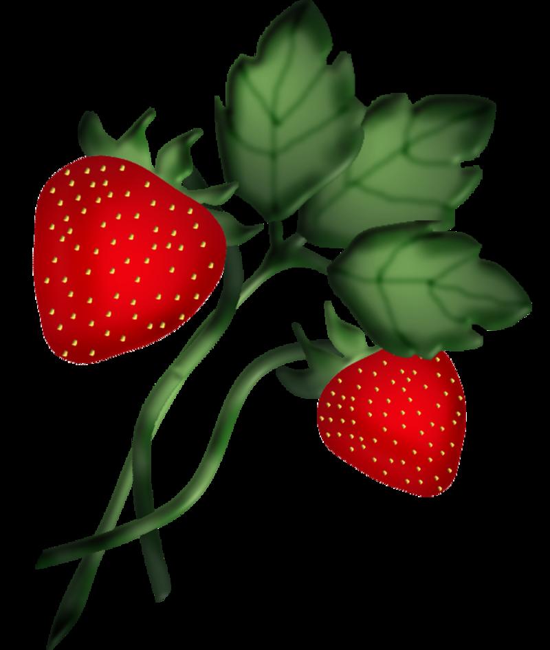 Clip art fruit pinterest. Strawberries clipart strawberry leave