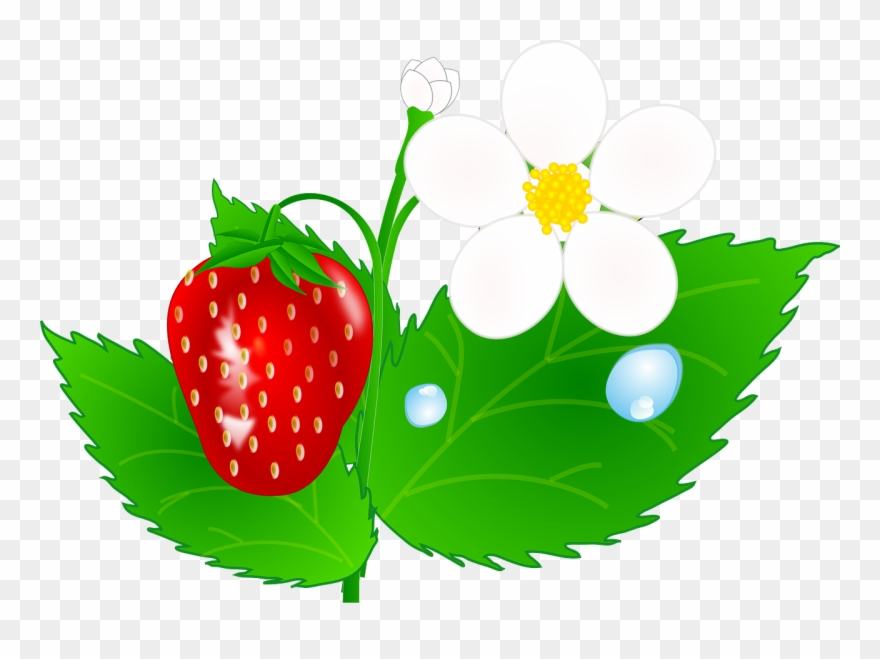 Strawberries clipart strawberry plant. Green leaves clip art