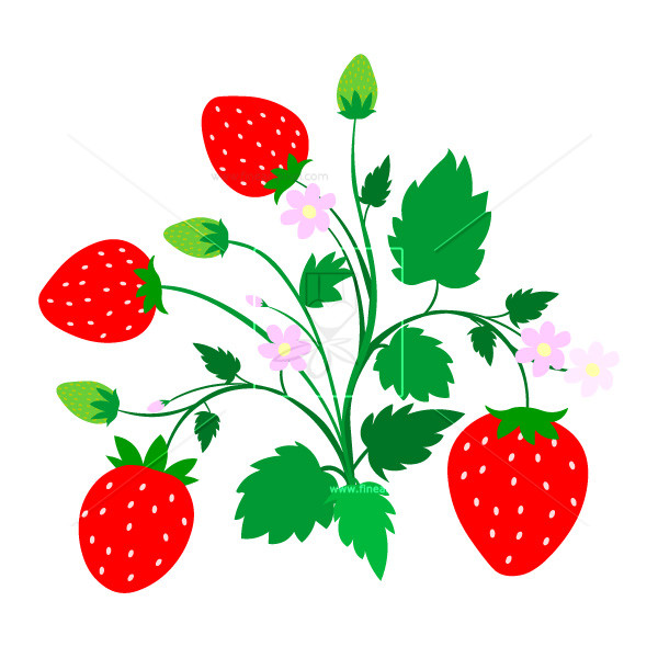 Free vectors illustrations graphics. Strawberries clipart strawberry plant