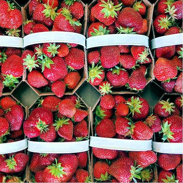 Strawberries clipart ten. Fresh fruits vergers pierre