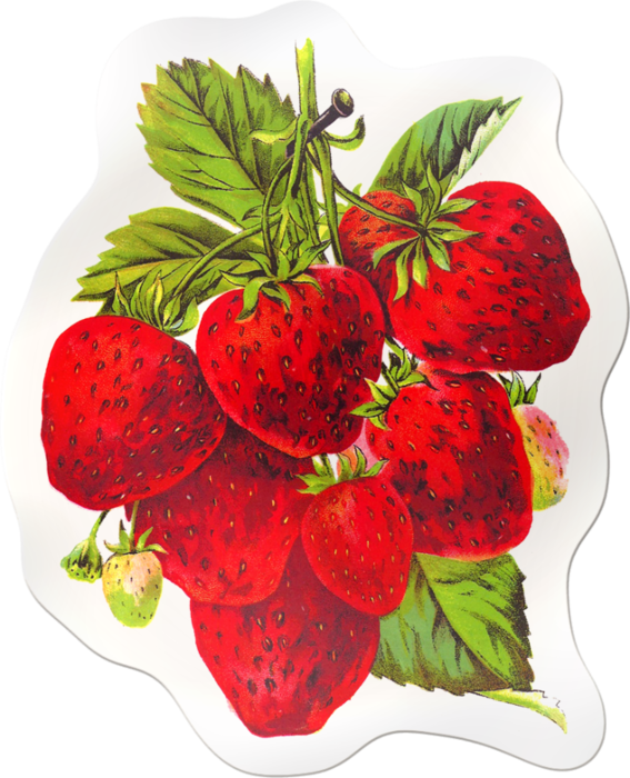Strawberries clipart vintage strawberry. Sticker x kb mutfak