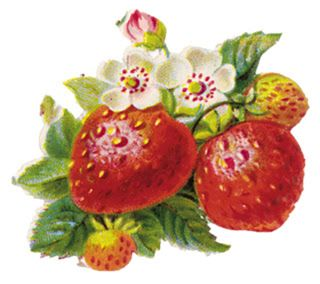 Adverts graphics . Strawberries clipart vintage strawberry