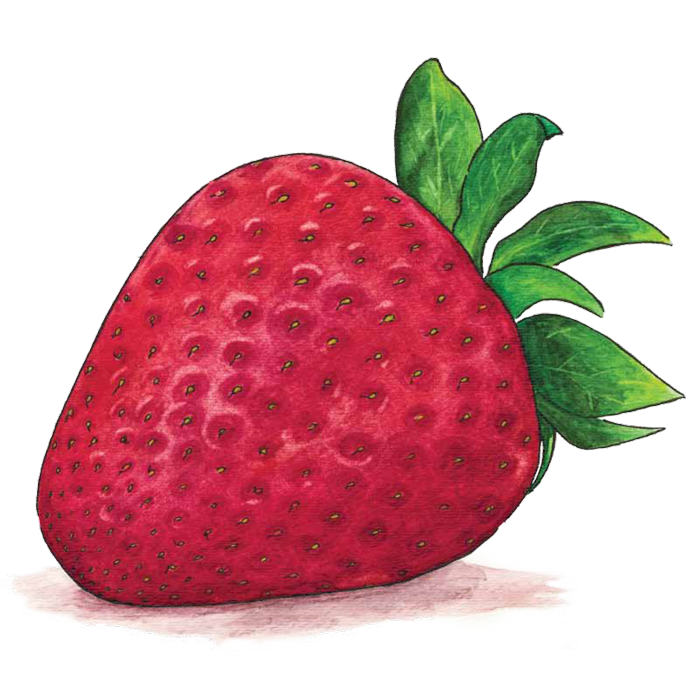Strawberries clipart watercolor. Richard lewis experience designer