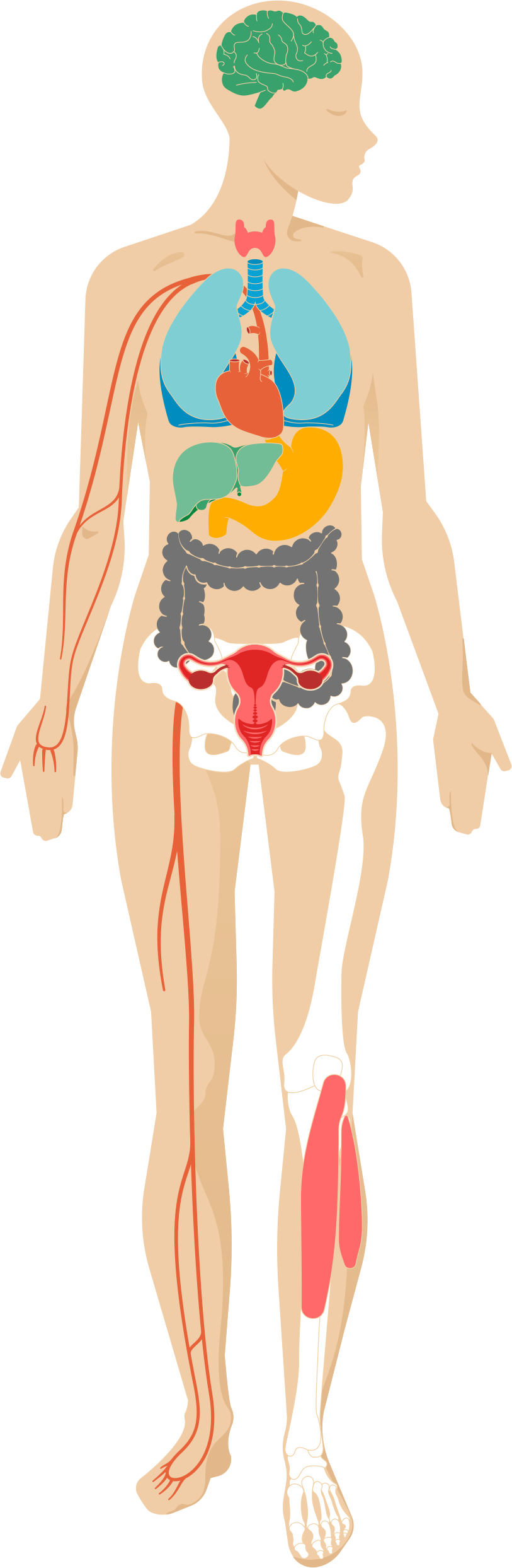 Stress clipart human. Illustration of the body