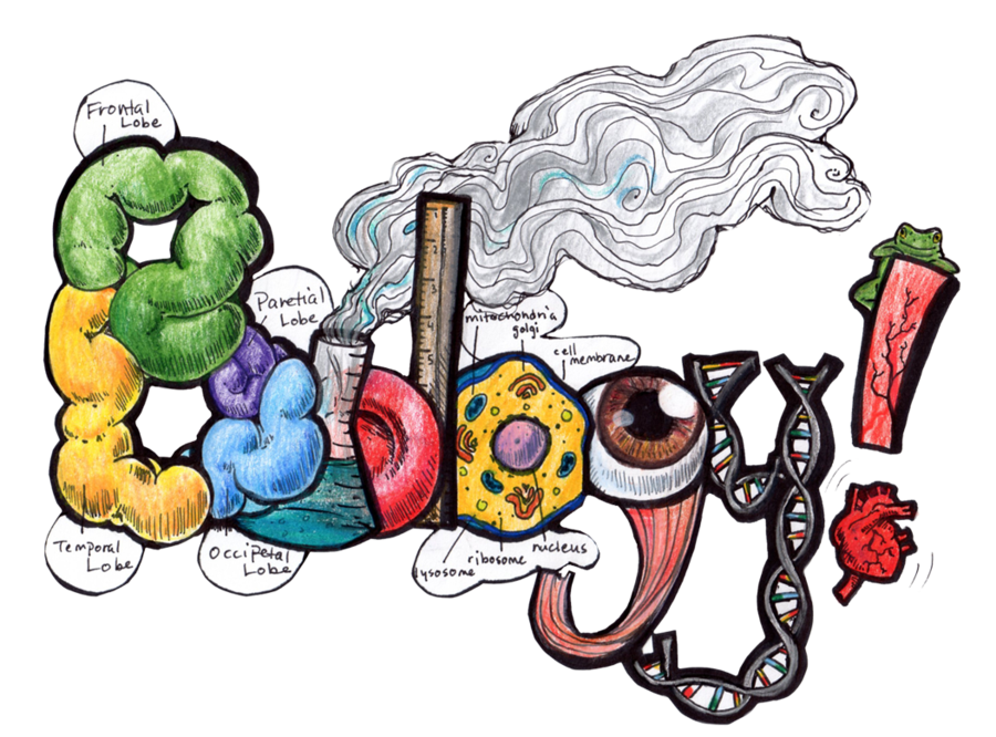 Free biology perfect for. Study clipart study notes