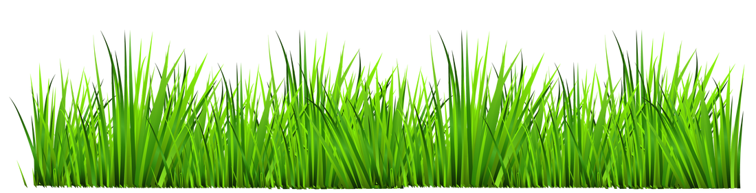 Grass biology organization of. Study clipart study session