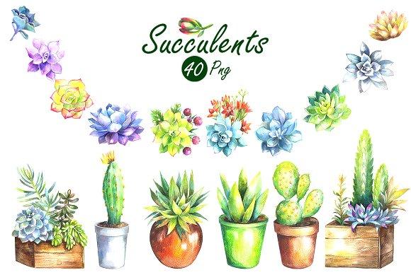 Watercolor succulents clip art. Succulent clipart