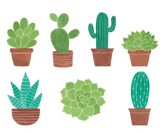 watercolor cliparts cactus. Succulent clipart