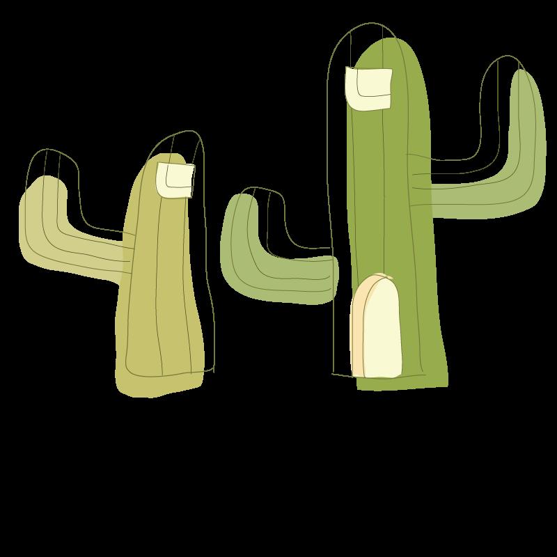 Cactaceae drawing plant download. Succulent clipart drawn