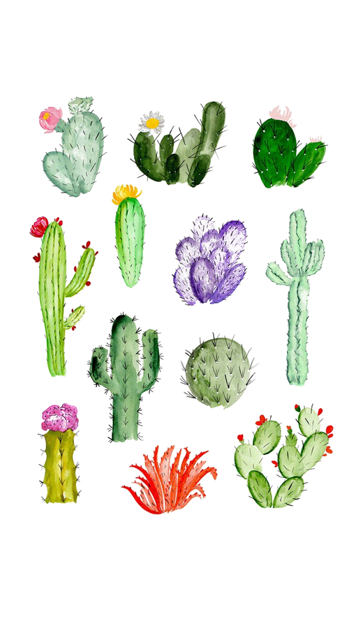 Cactaceae drawing watercolor painting. Succulent clipart drawn