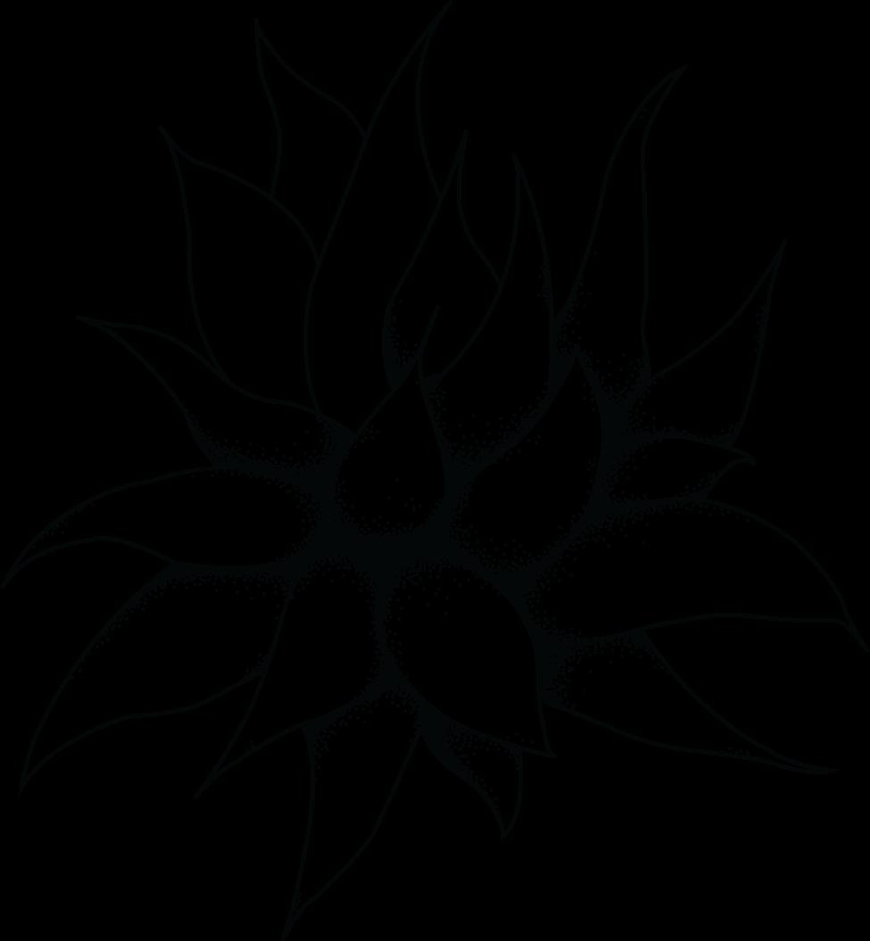 Succulent clipart drawn. Drawing at getdrawings com