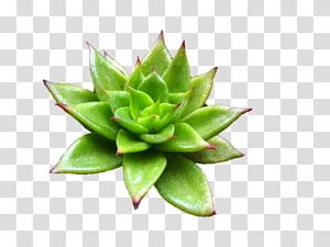 Aesthetic plants illustration . Succulent clipart light green