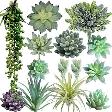 Succulent clipart light green. Supla pack of artificial