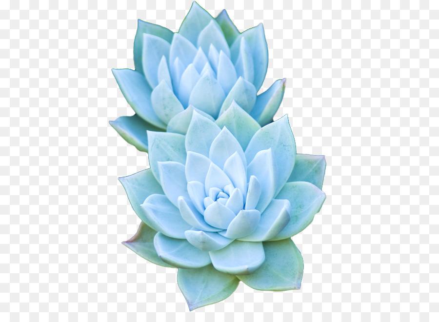 Succulent clipart succulent flower. Flowers background cactus plants