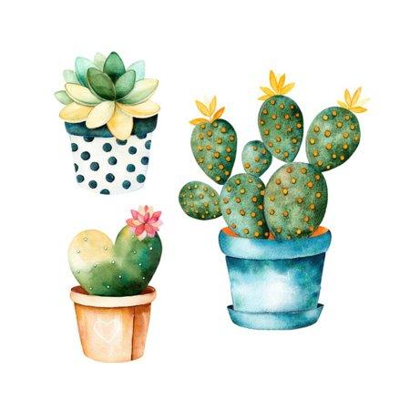 Watercolor handpainted cactus plant. Succulent clipart succulent flower