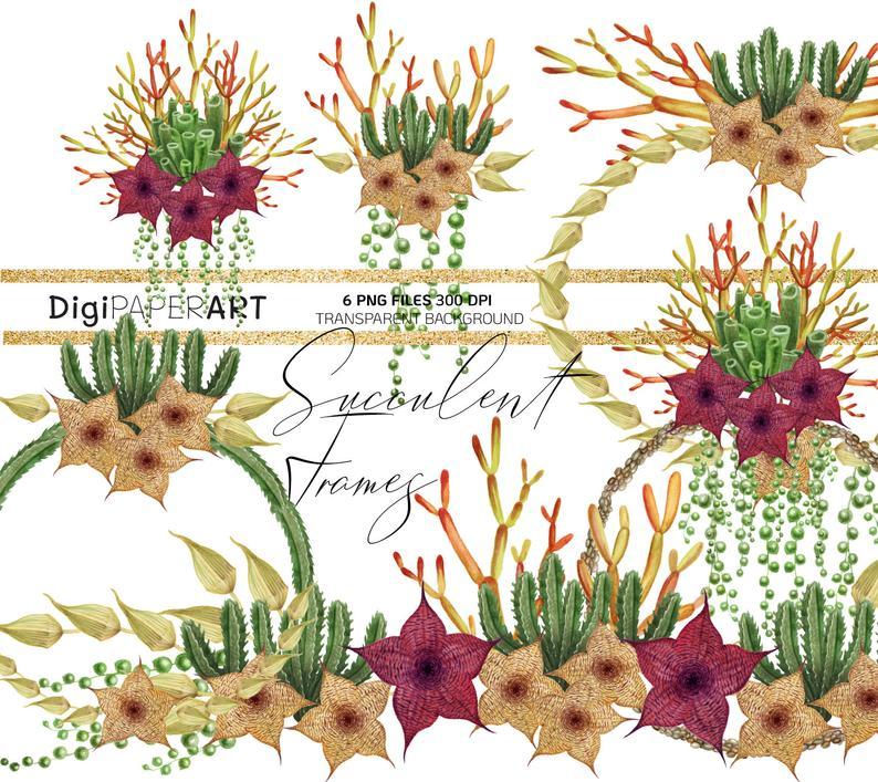 Watercolor hand drawn border. Succulent clipart succulent flower