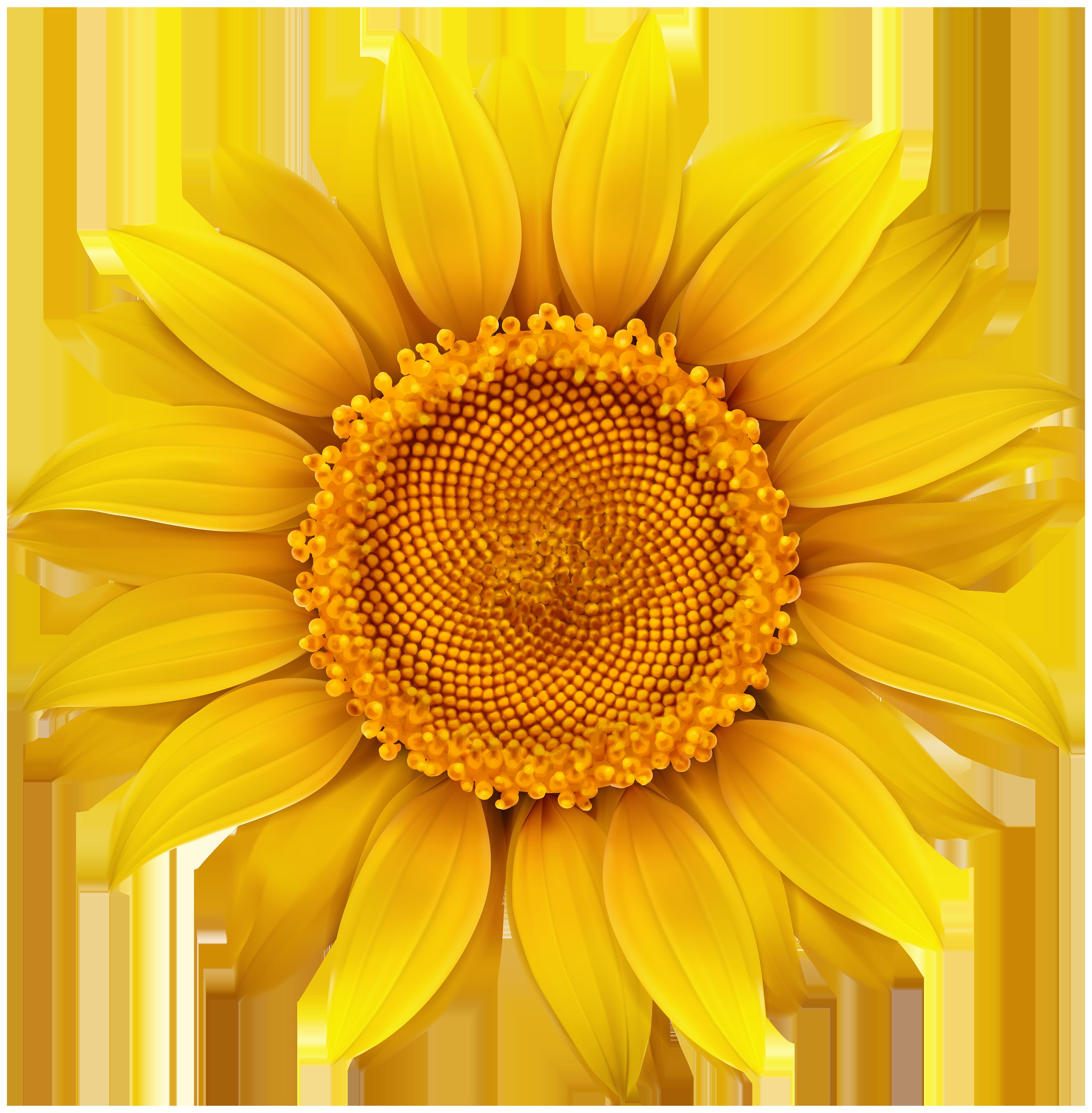 Sun flower png. Sunflower image gallery yopriceville