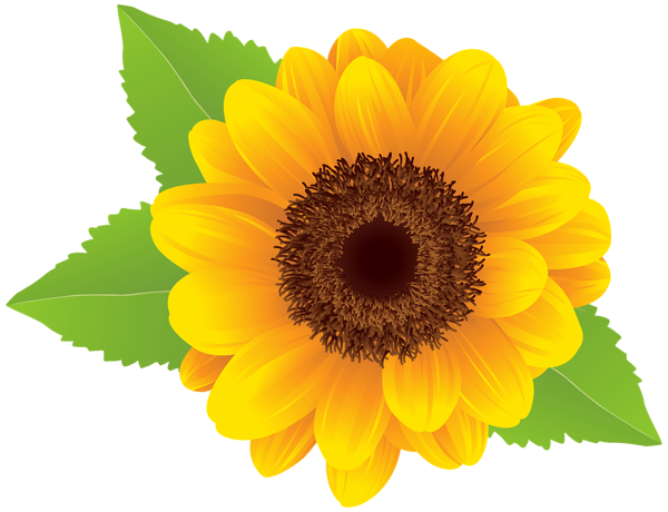 Sun flower png. Sunflower clipart image