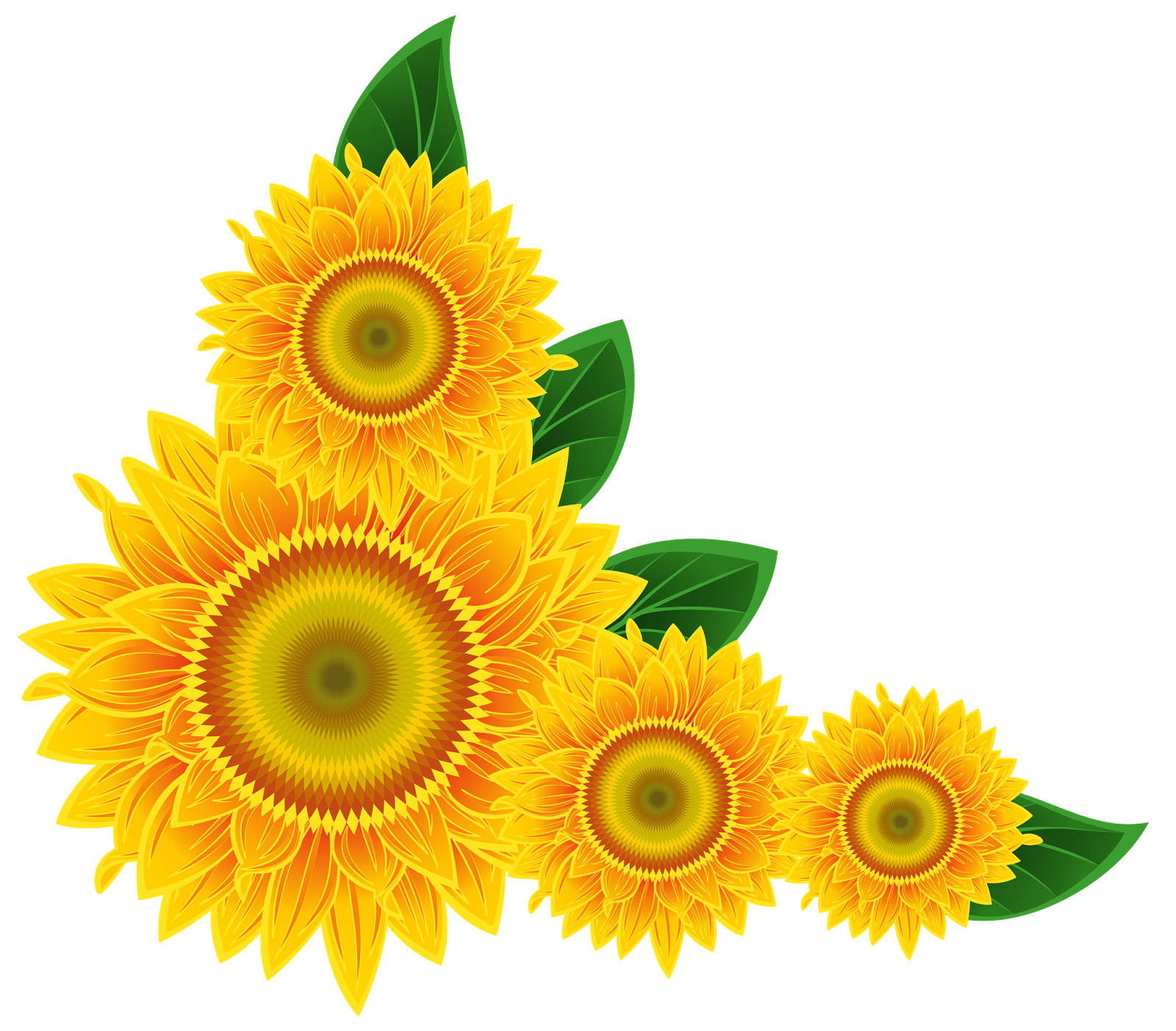Sunflower border png. Transparent pictures free icons