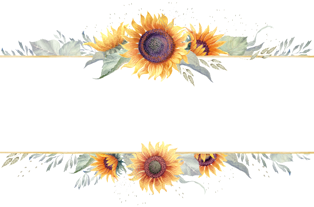 Transparent for fresh free. Sunflower border png