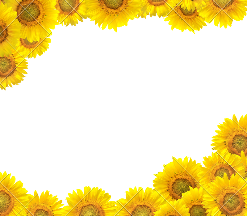 Photos by canva. Sunflower border png