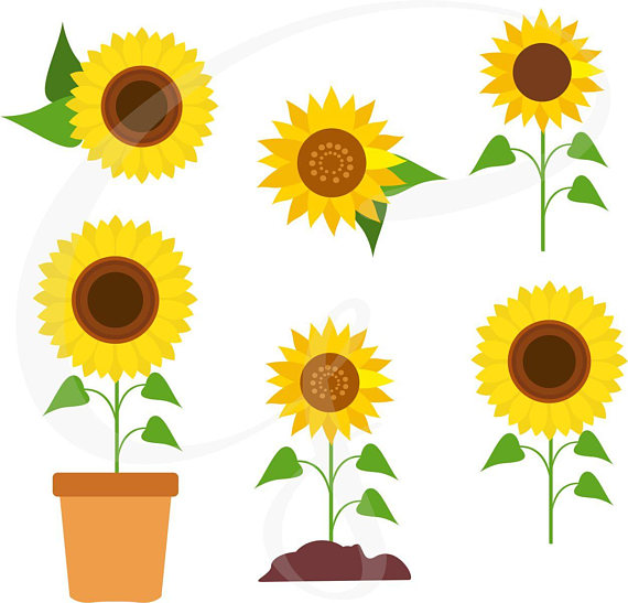 Vector sunflowers flower . Chain clipart sunflower