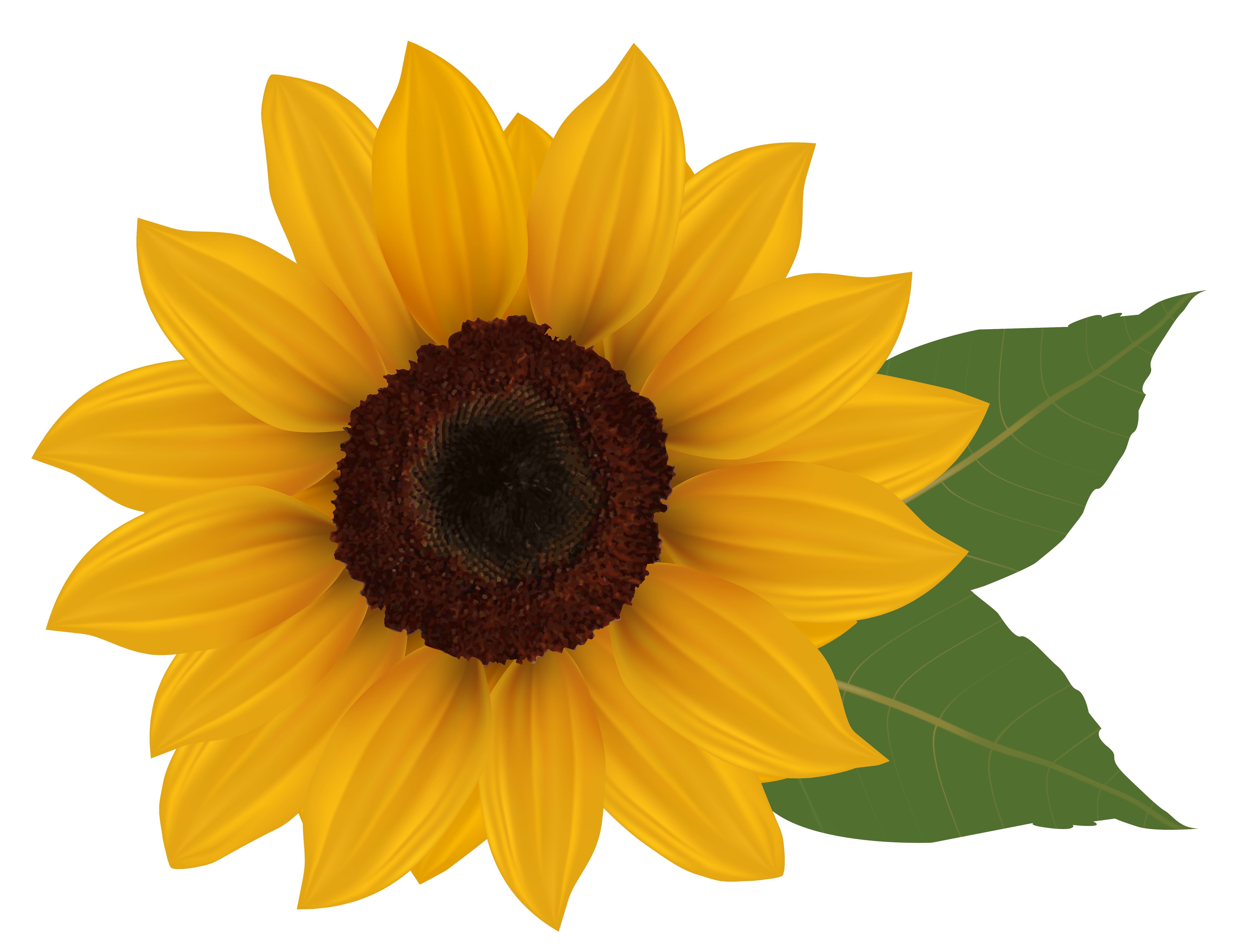 Sunflower png picture gallery. Daffodil clipart animated