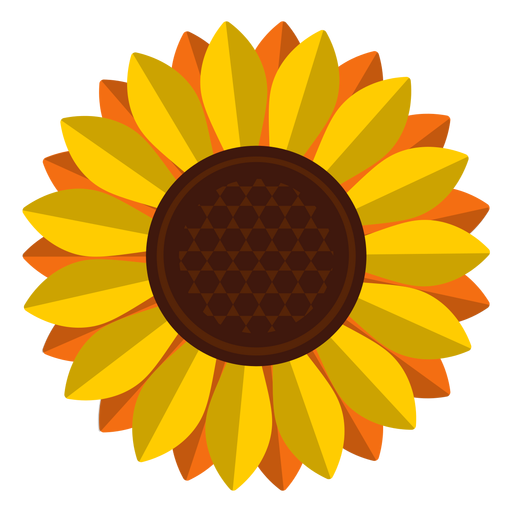 Sunflower vector png. Isolated head clipart transparent