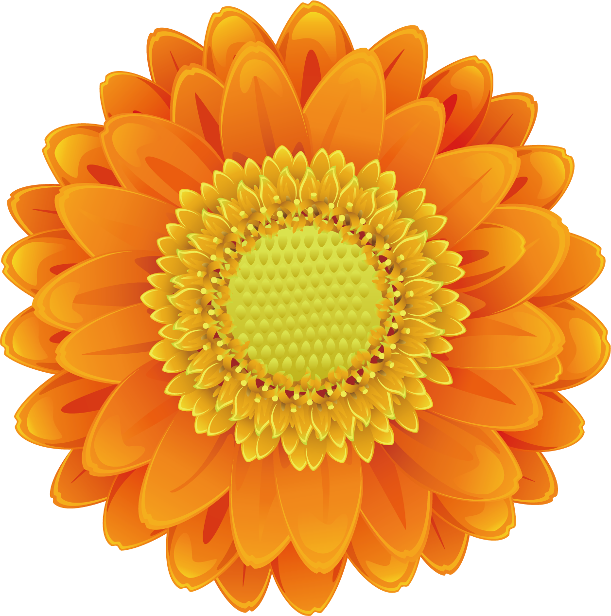 Sunflower vector png. Drawing cartoon transprent free