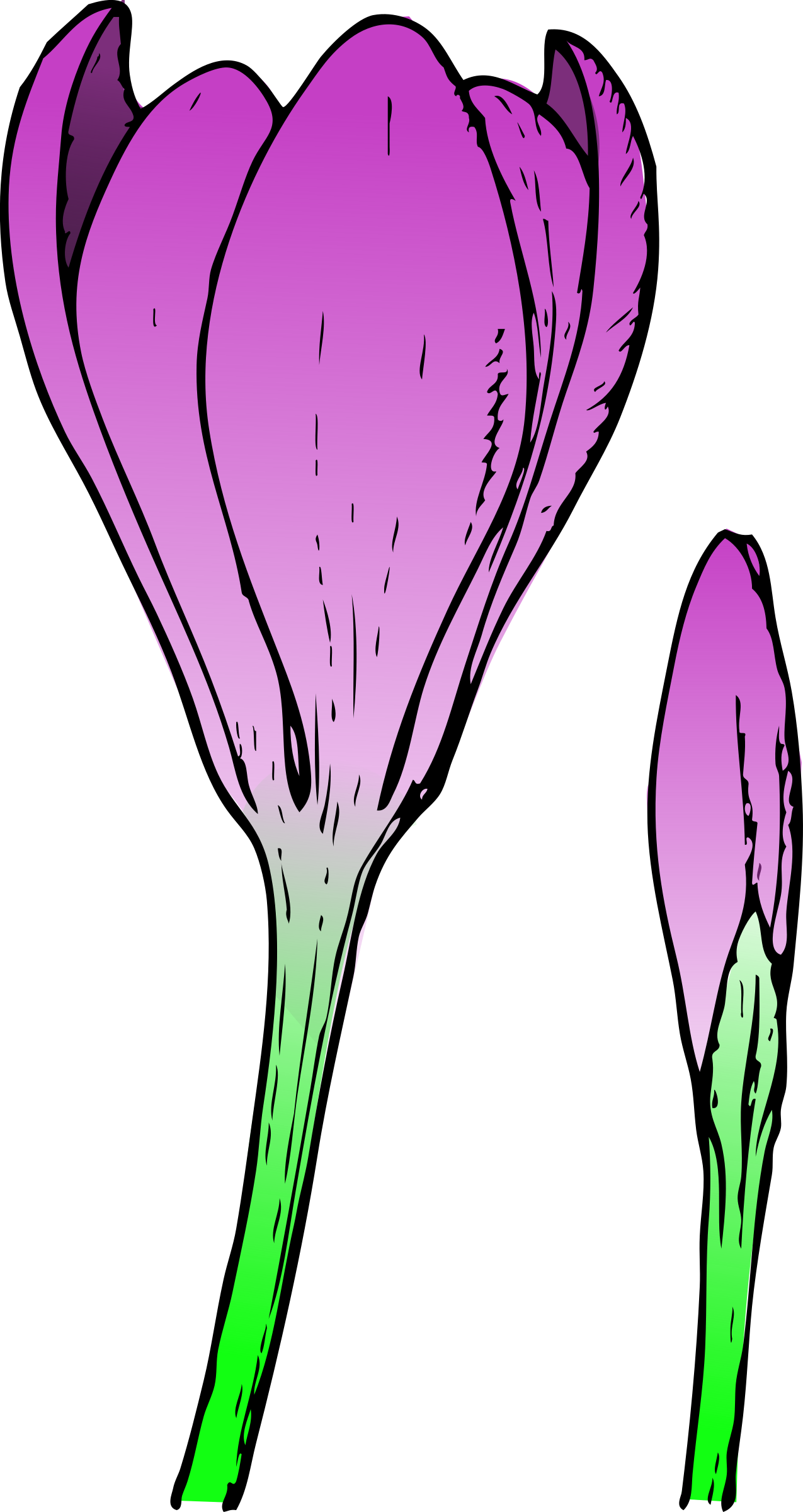 Crocus big image png. Sunny clipart colored