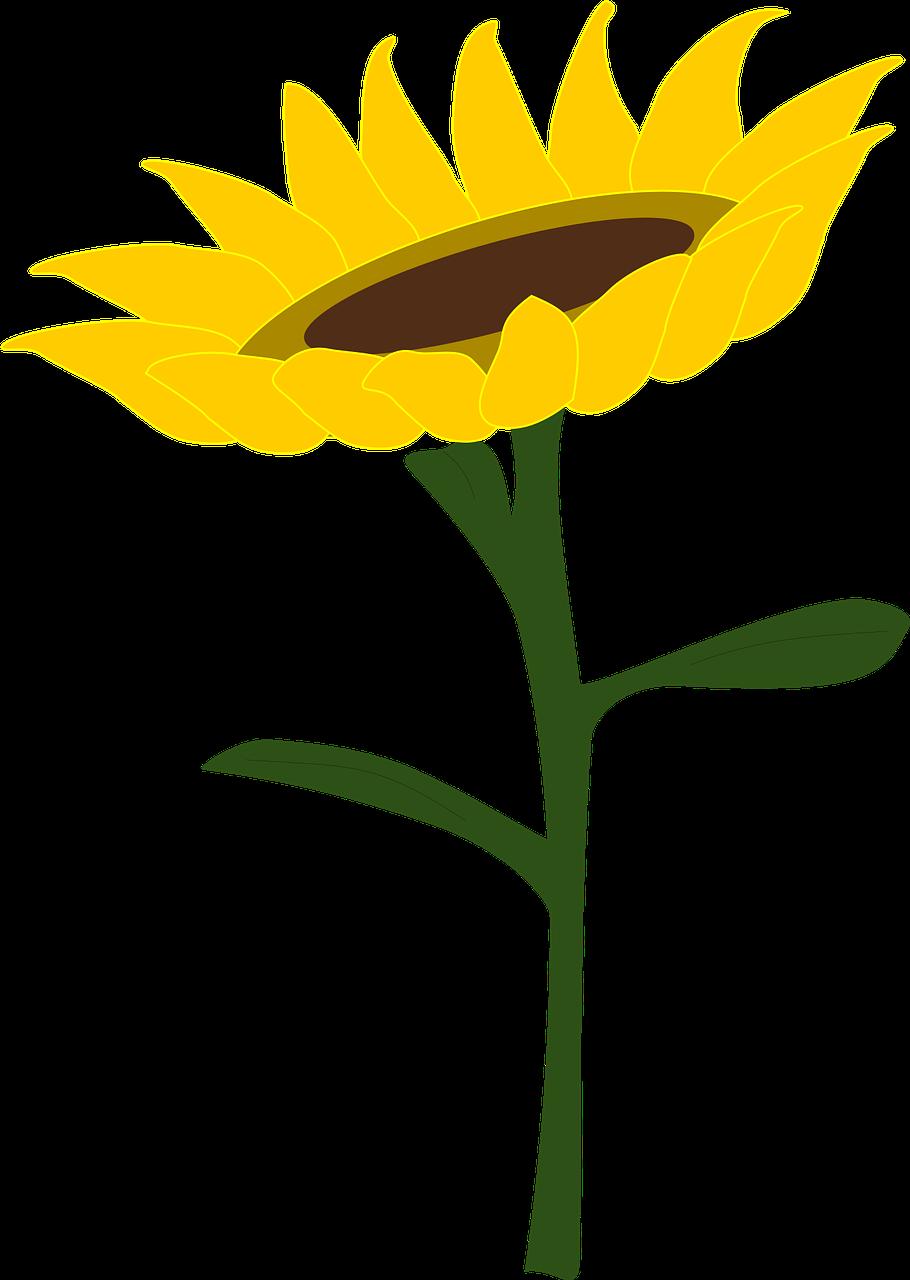 Sunflower honey field summer. Sunny clipart meadow