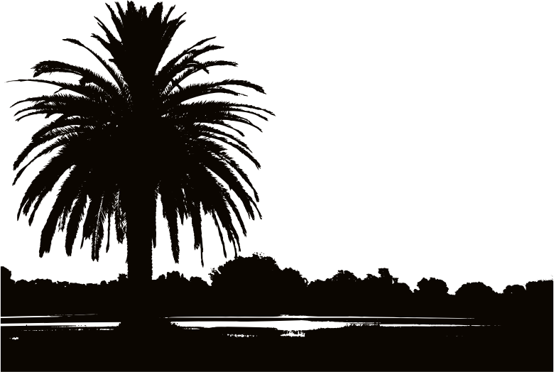 Sunset clipart black and white. Palm silhouette medium image