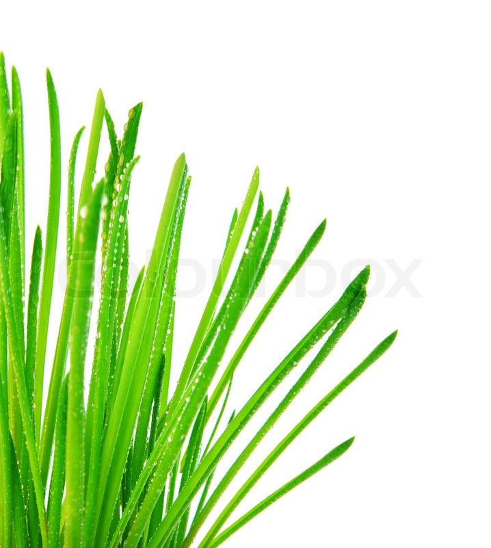 Grass border pencil and. Swamp clipart