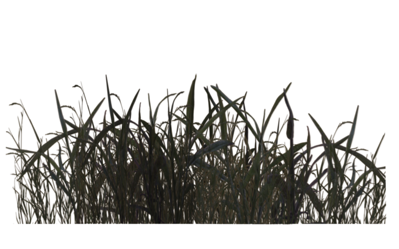 Swamp clipart pink grass. Download free png by