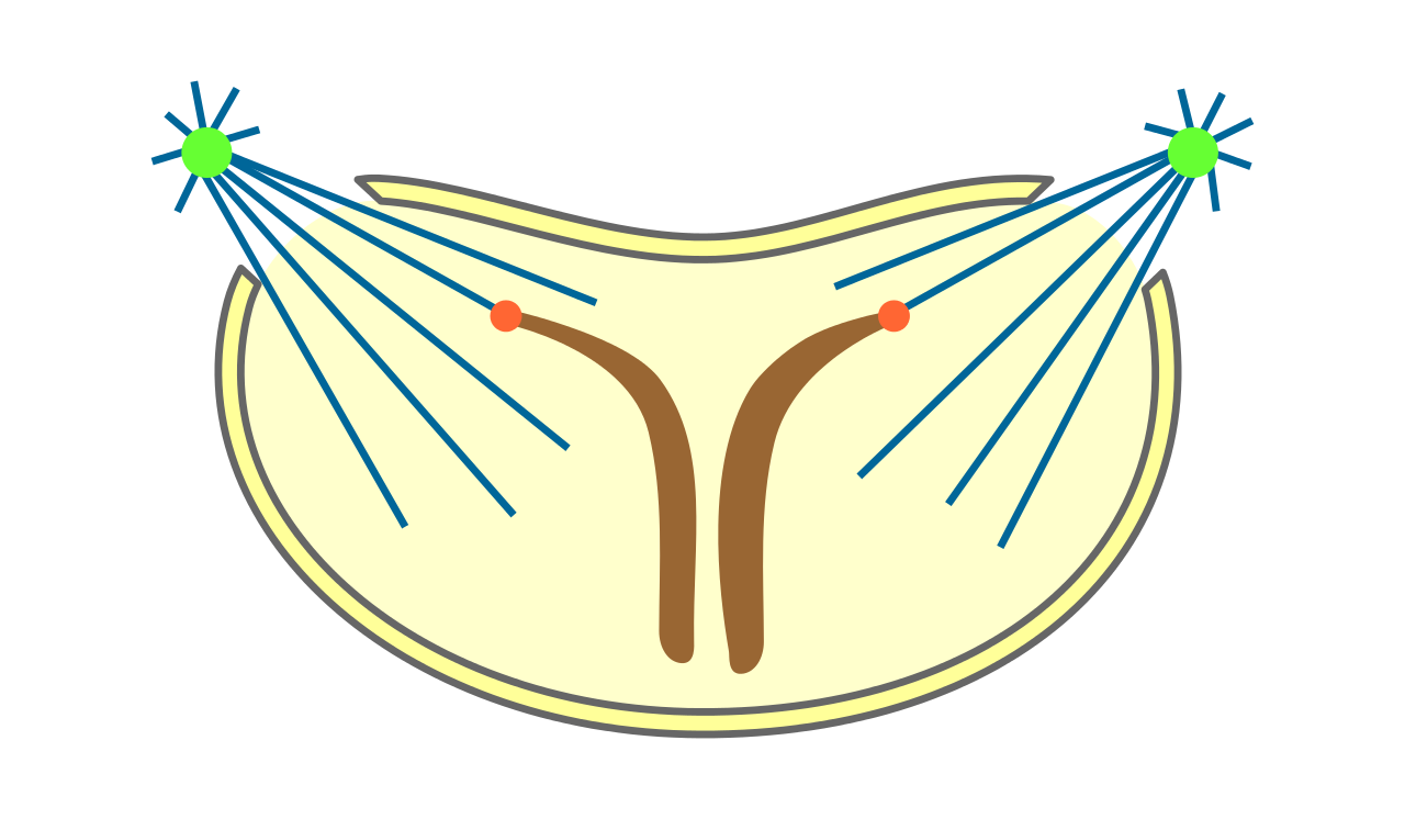 File mitosis classification semiopen. Swimsuit clipart svg